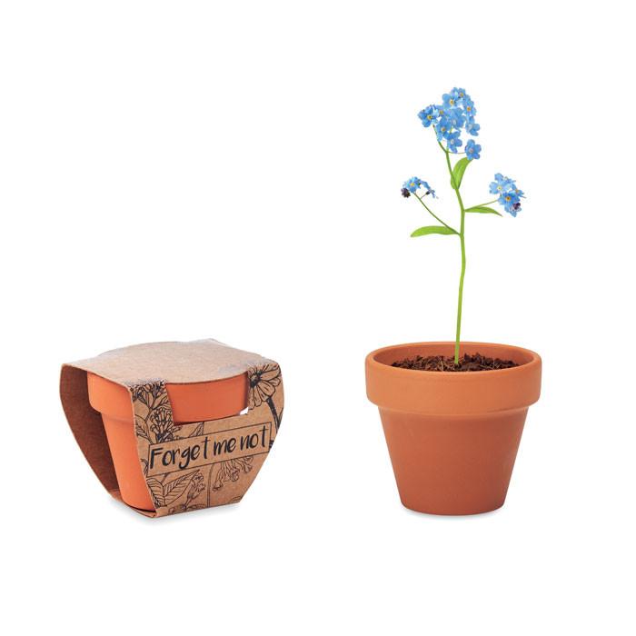 Piccolo vaso con semi
